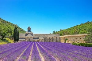 Abbey of Senanque and blooming rows lavender flowers, Provence, France, Europe