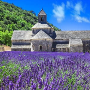 Abbaye de Senanque with blooming lavender field, Provence, France