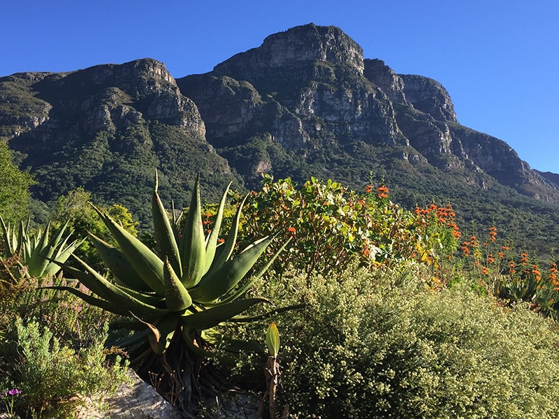 Kirstenbosch National Botanical Garden (Photo: Joel Centano)