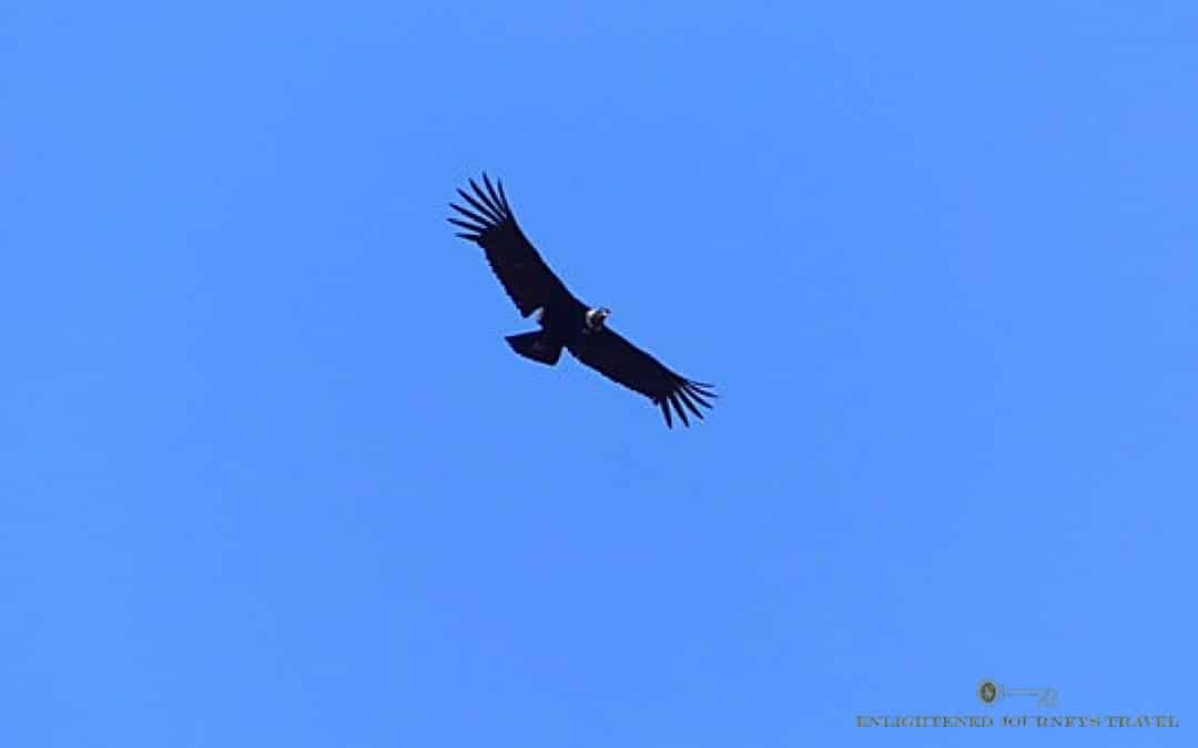 Andean condor, Argentina travel tips