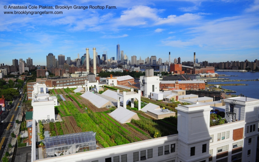 Brooklyn Grange Rooftop Farm, how to plan a trip to New York City