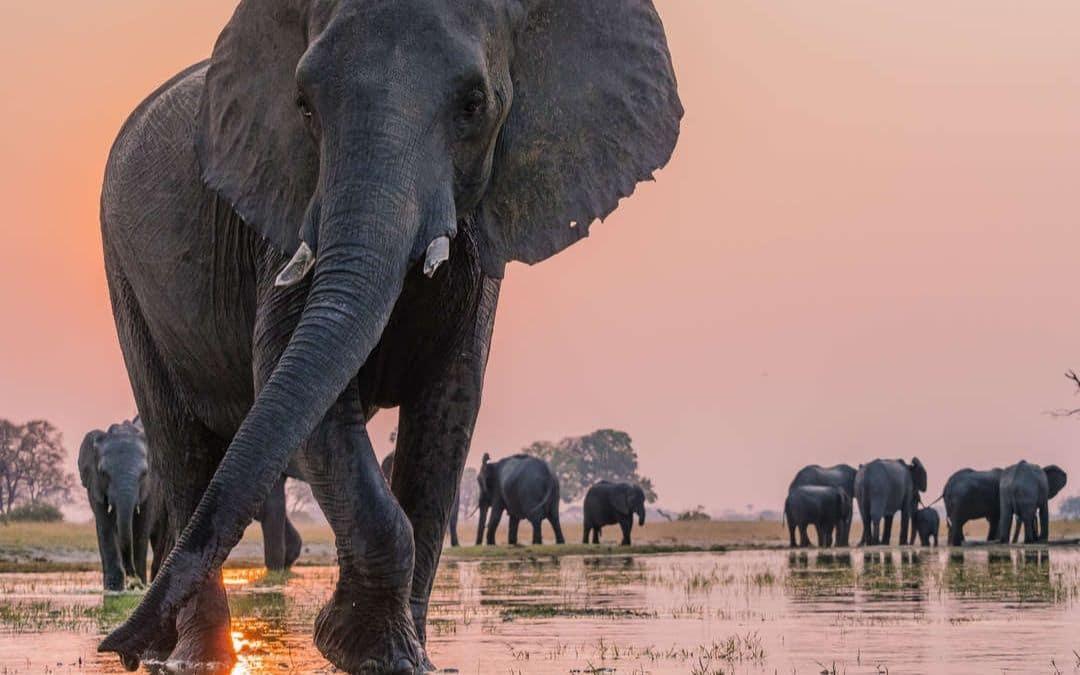 Photo Safari in Linkwasha