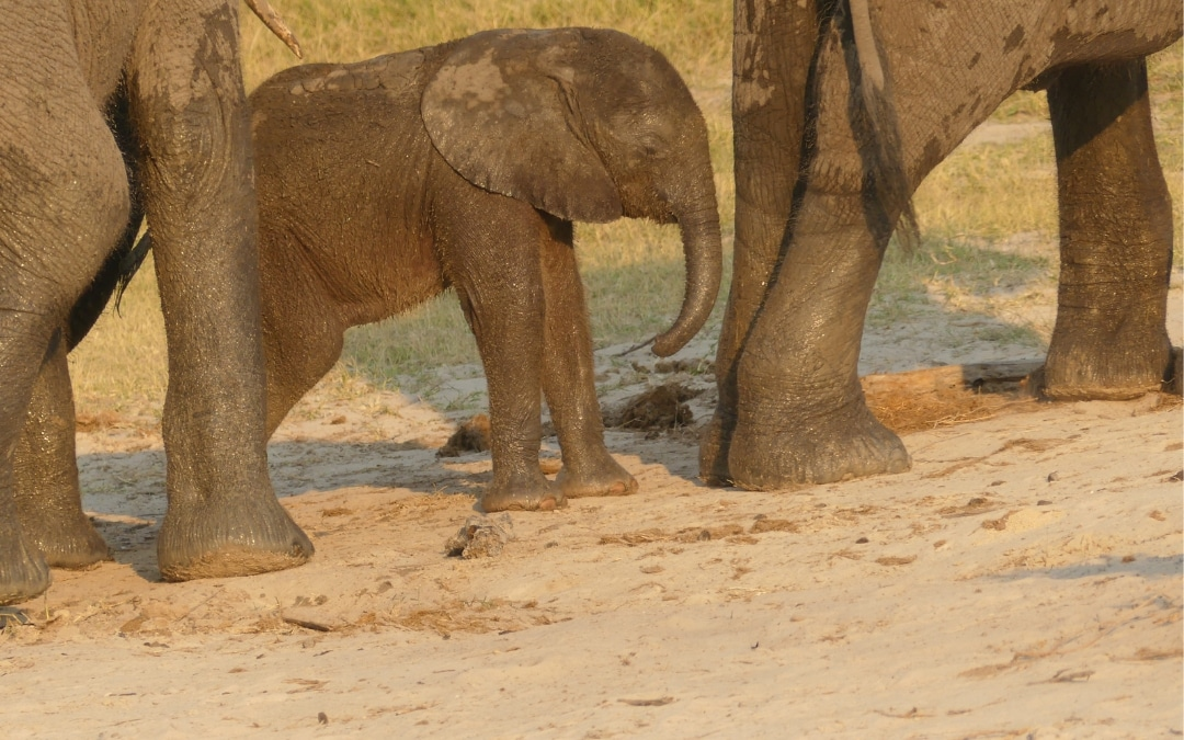 Why Take Kids on Safari: It Could Be One of the Greatest Gifts You Can Give
