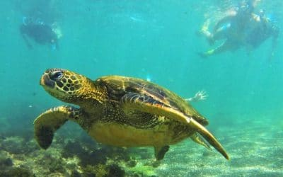A Perfect Family Adventure Destination: Your Ecuador and Galápagos Family Vacation Dream