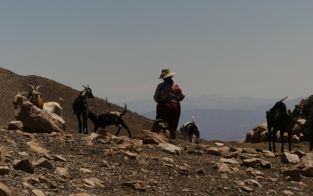 Don Isidro's wife at her goat farm in the Andean, Argentina